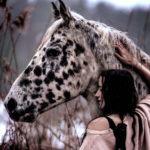 Pferdefotografie Oberfranken