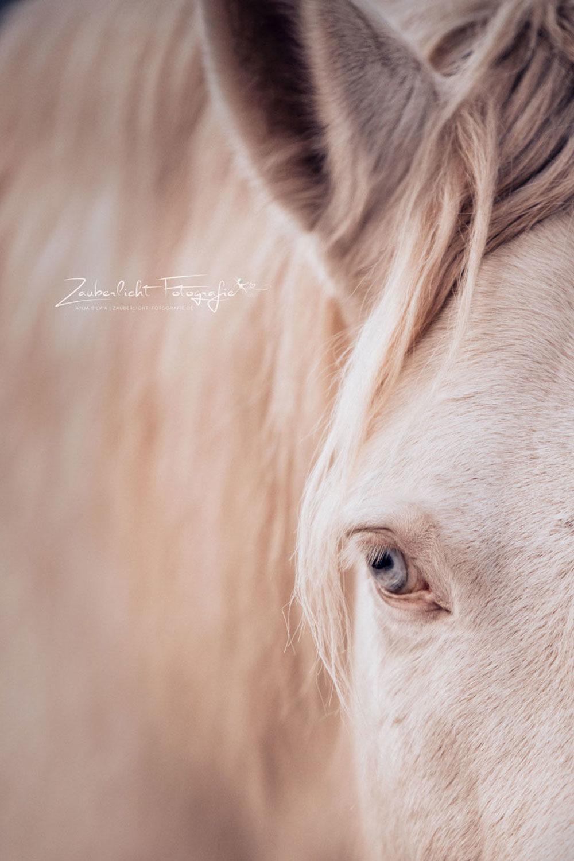 Pferdefotografie-Münchberg