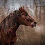 Fotografie von Pferden