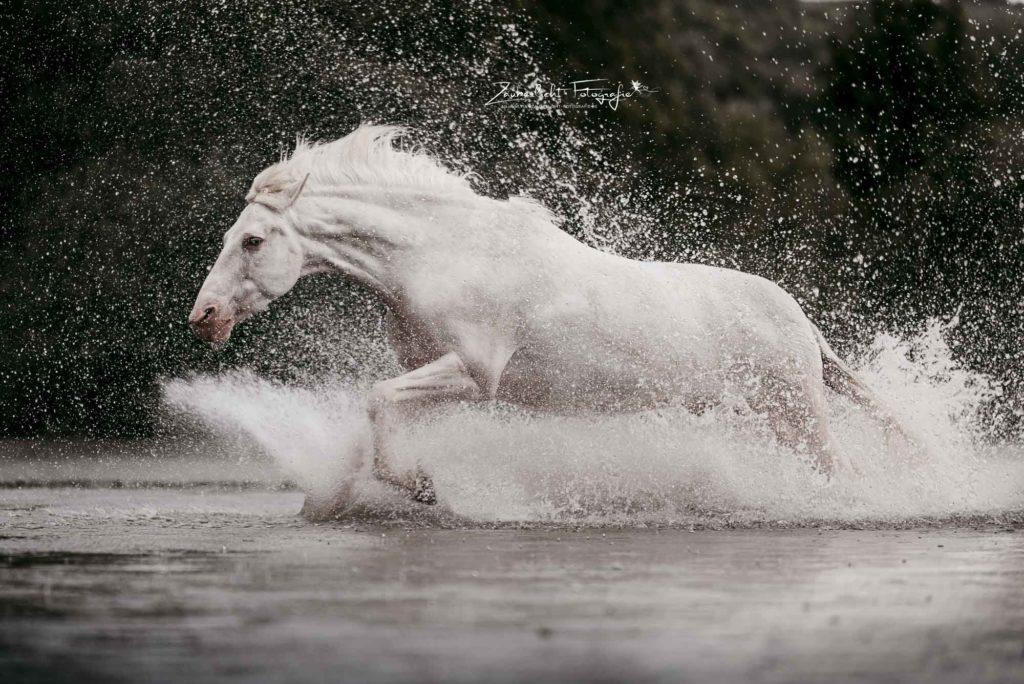 Pferdefotograf Kulbach
