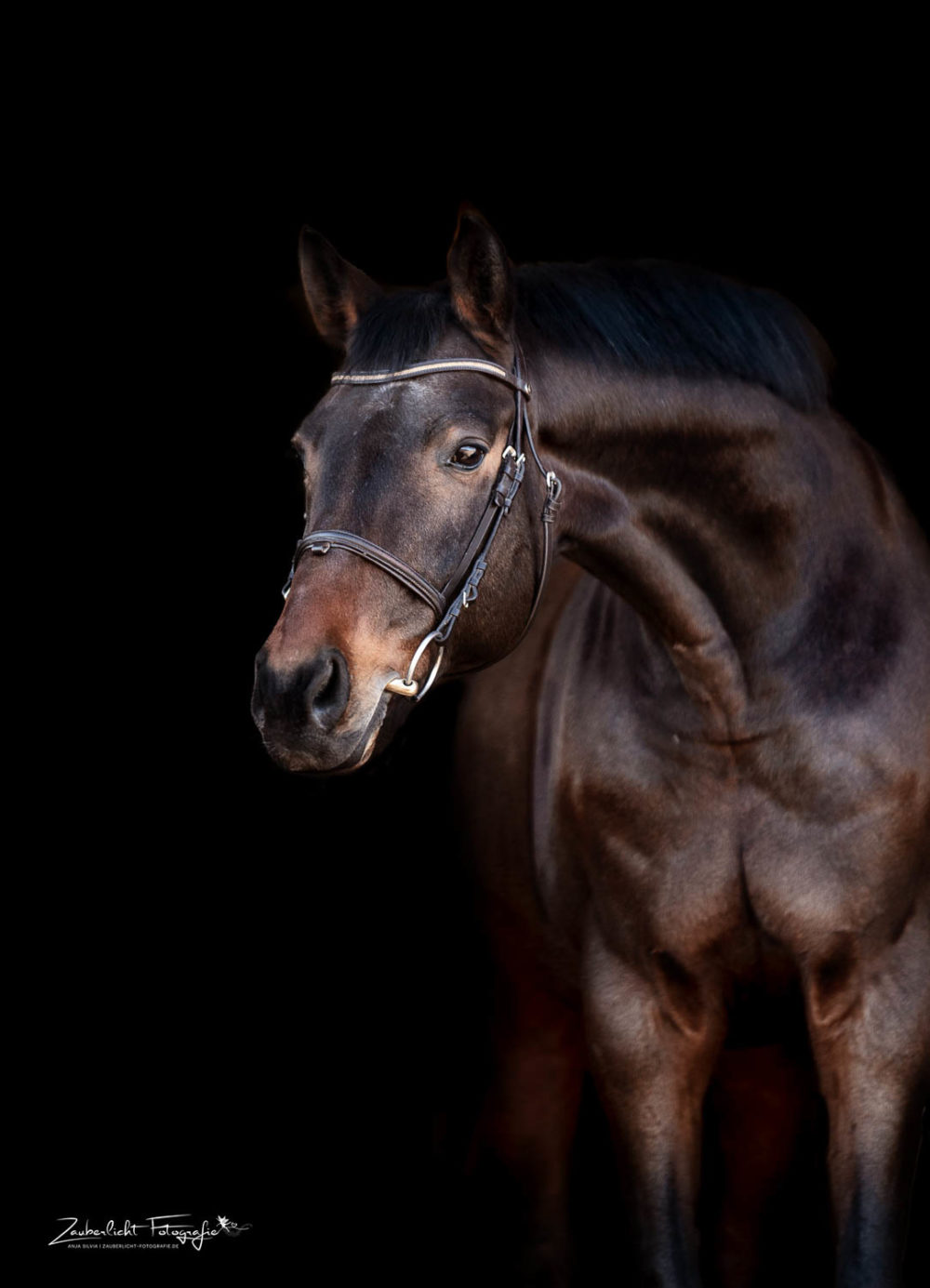 Zauberlicht Fotografie Portrait