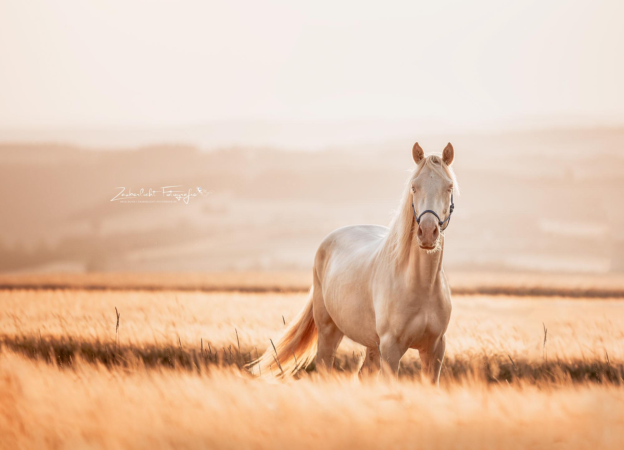 Pferde Fotoshooting im Sommer