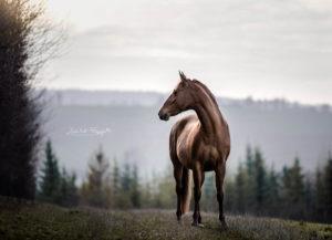 Pferdefotograf Mainfranken